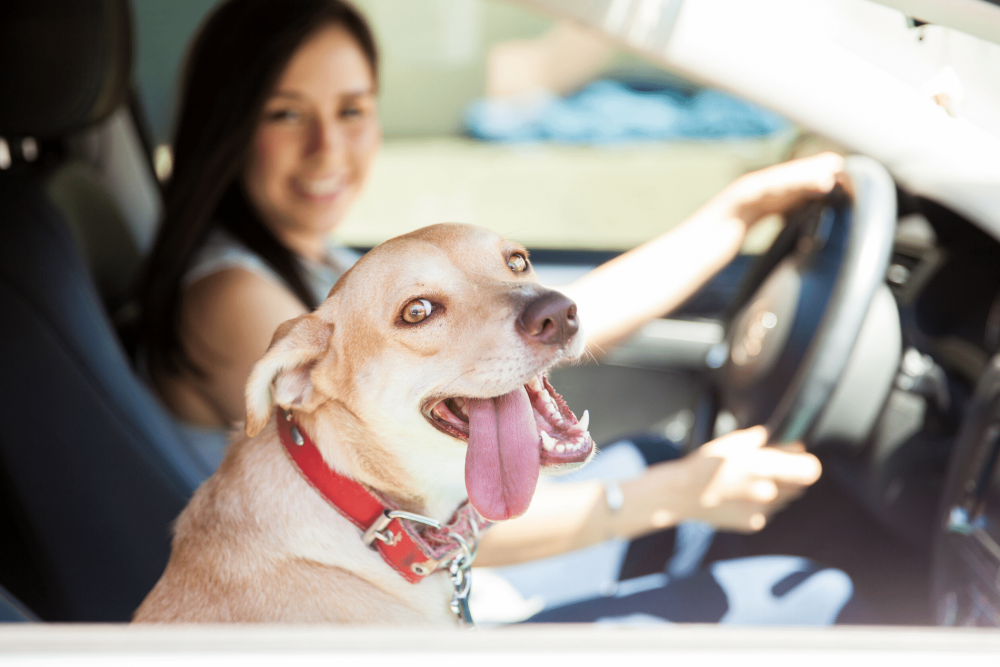 Traveling with Your Dog? Follow This Advice